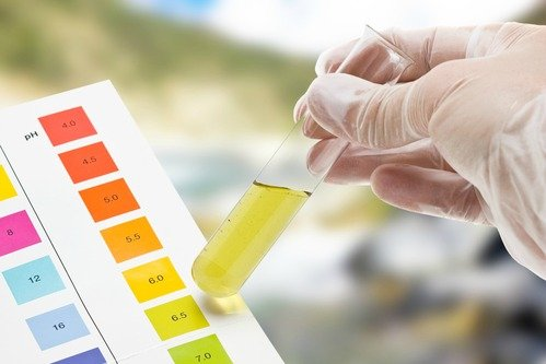 Kombucha im Reangenzglas wird auf pH-Wert getestet