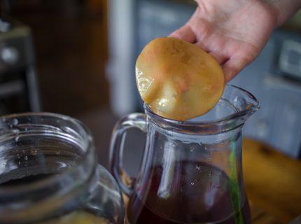 Kombucha Pilz Verwendung