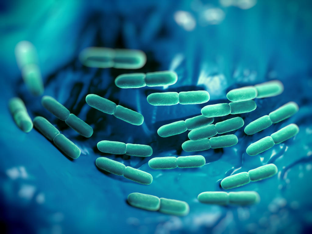 Joghurt Kultur Bifidobacterium lactis